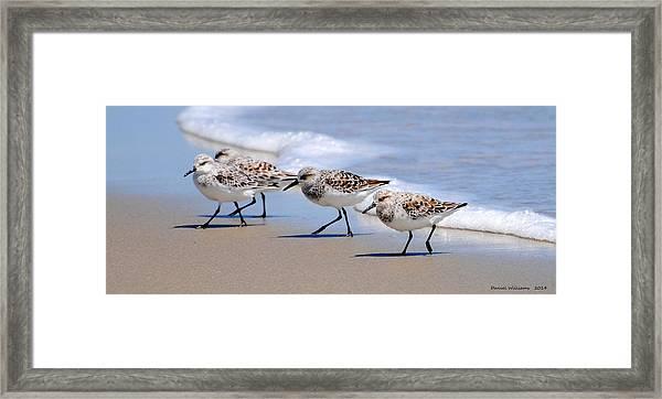 Shorebird Quartet Framed Print