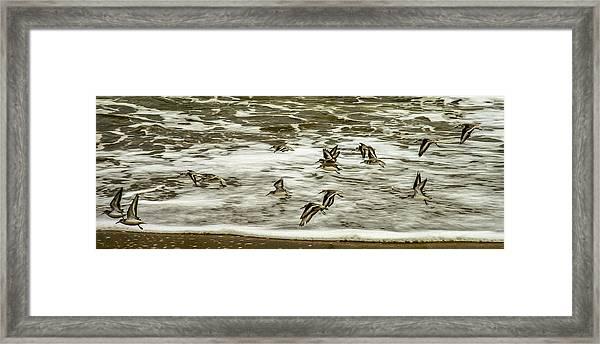 Shorebirds At Duck Framed Print