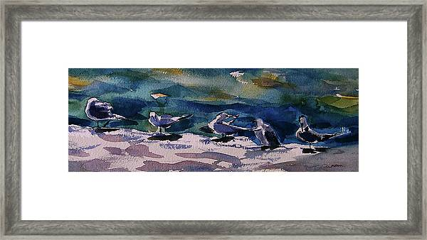 Shoreline Birds Iv Framed Print