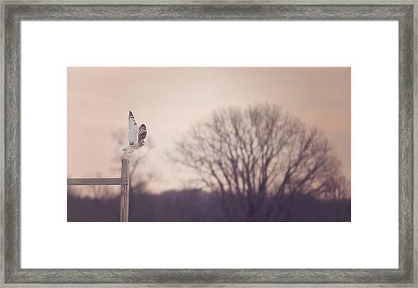 Short Eared Owl At Dusk Framed Print