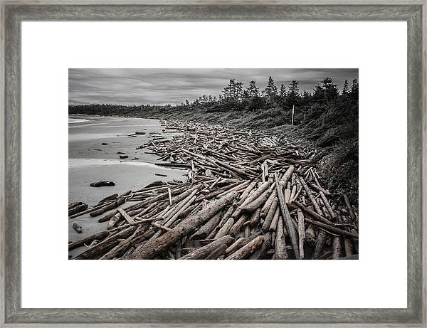 Shoved Ashore Driftwood  Framed Print