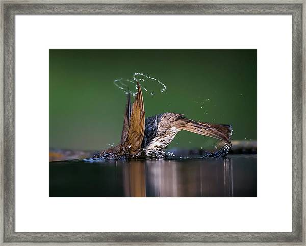 Show Off Framed Print by Young Feng
