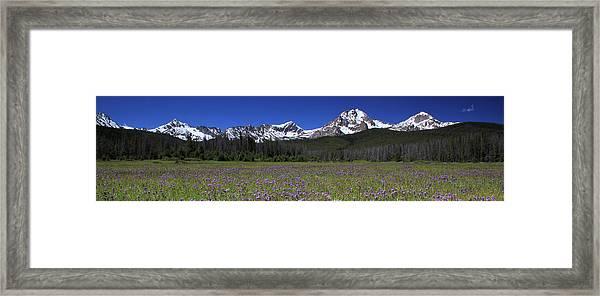Showy Penstemon Wildflowers Sawtooth Mountains Framed Print