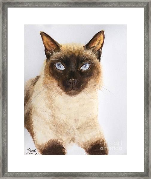 Siamese Cat Over White Framed Print