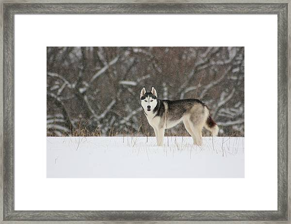 I've Been Spotted Framed Print