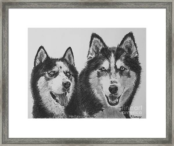 Siberian Husky Dogs Sketched In Charcoal Framed Print