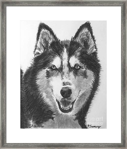 Siberian Husky Drawing Framed Print