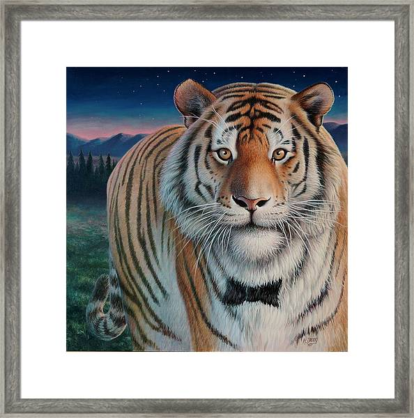 Zoofari Poster The Siberian Tiger Framed Print