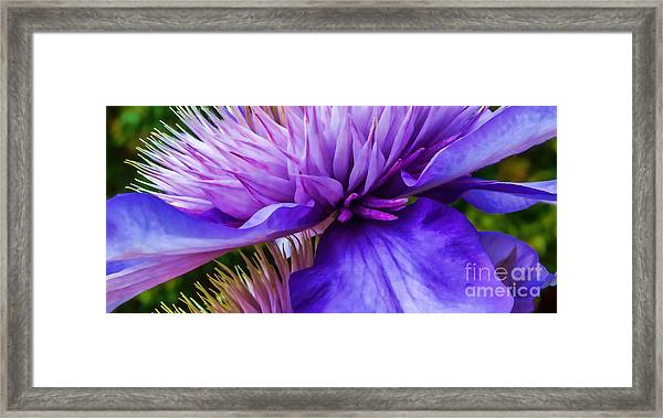 Side View Clematis Framed Print