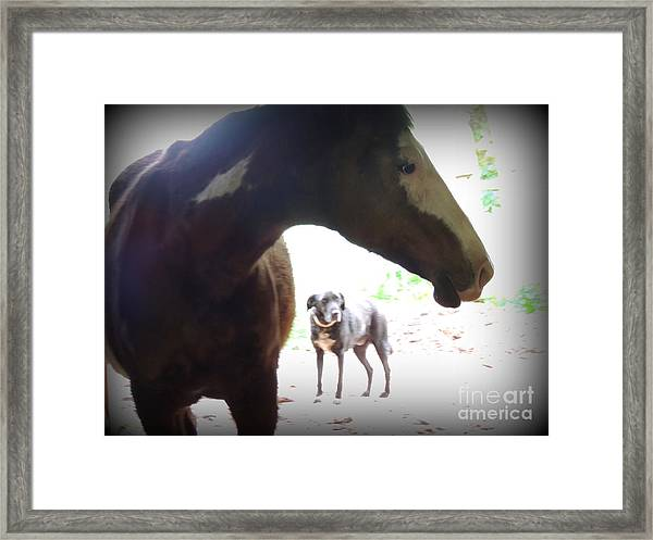 Sierra And Cody In The Mist Framed Print