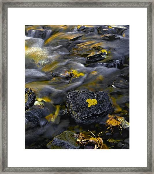 Sierra Stream Framed Print