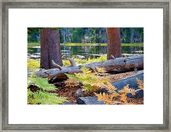 Siesta Lake Framed Print