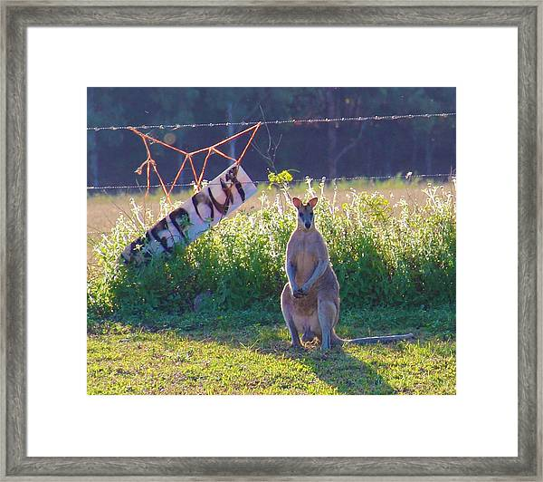 Framed Print featuring the photograph Signs  by Debbie Cundy