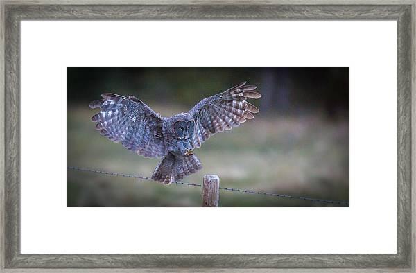 Silent Landings  Framed Print