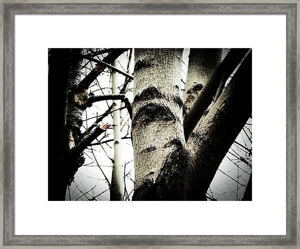 Silent Witness Framed Print