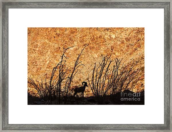 Silhouette Bighorn Sheep Framed Print