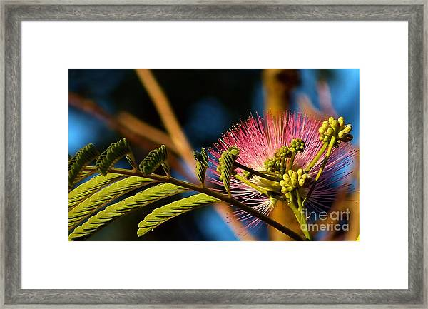 Silk At Sunrise Framed Print