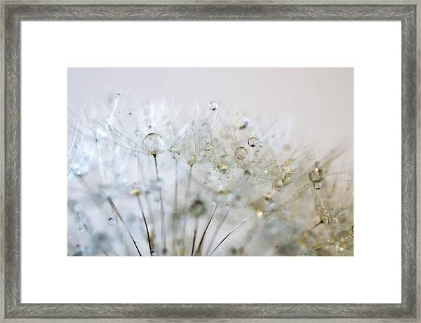 Silver And Gold Framed Print