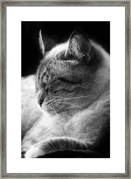 Silver Lynx Point Framed Print