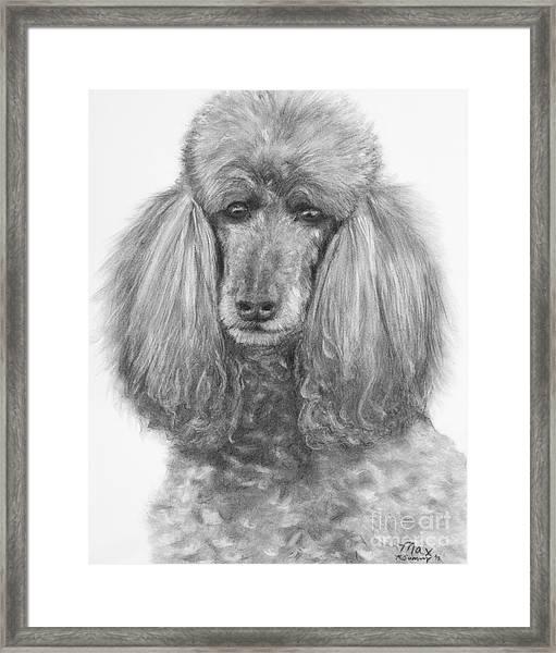 Silver Standard Poodle Drawing Framed Print