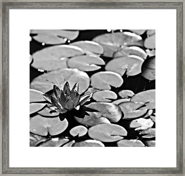 Silver Waterlily Framed Print