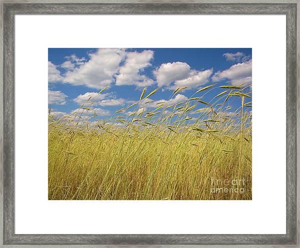 Simple Moments On The Farm Framed Print