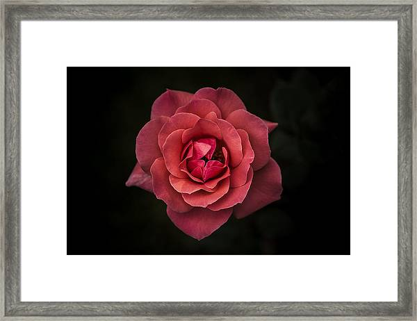 Simplicity Is Beauty Framed Print