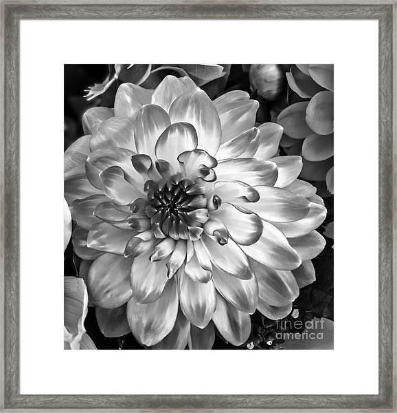 Simply Beautiful Framed Print