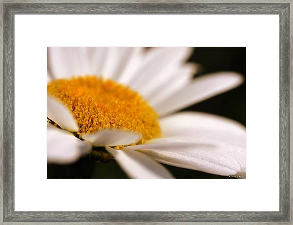 Simply Daisy Framed Print