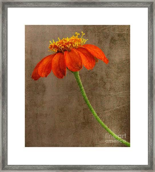 Simply Orange Framed Print