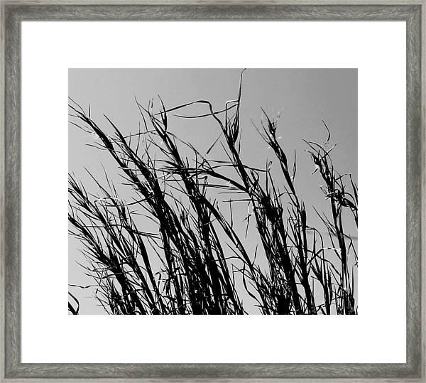 Simply Straw Framed Print