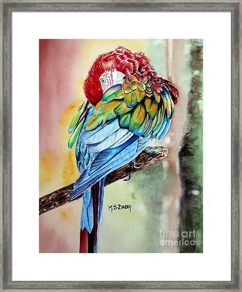Sinbad Framed Print