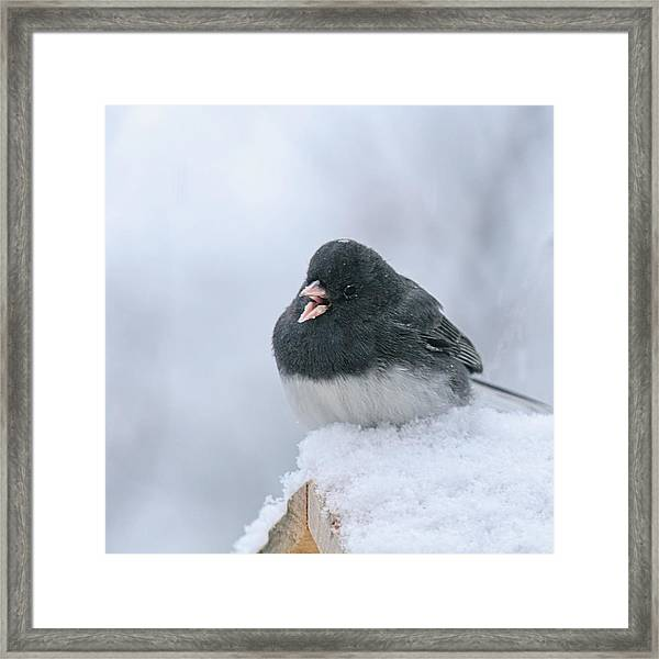 Sing A Happy Song Framed Print