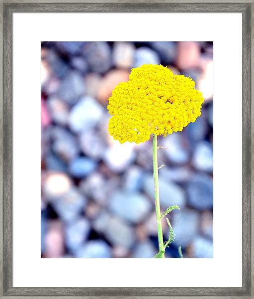 Single 16139 Framed Print