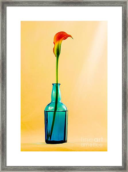 Single Calla In Blue Bottle Framed Print