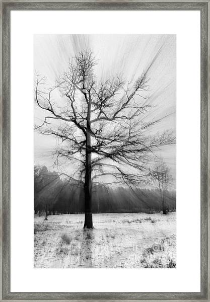 Single Leafless Tree In Winter Forest Framed Print
