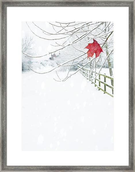 Single Red Leaf Framed Print