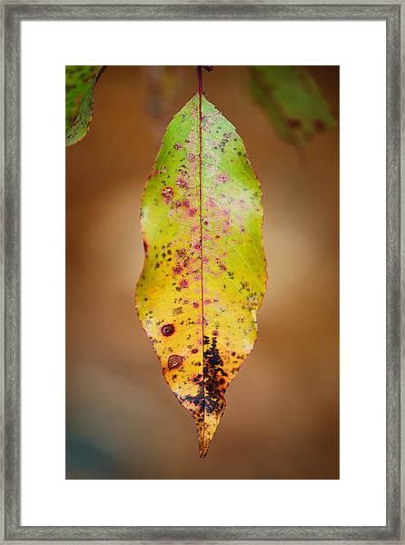 Single Framed Print