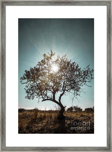 Single Tree Framed Print