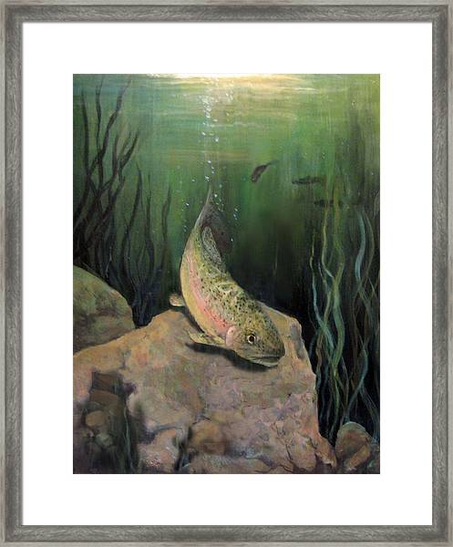 Single Trout Framed Print