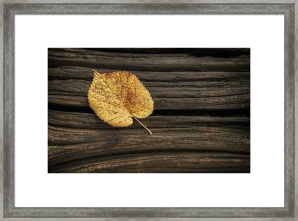 Single Yellow Birch Leaf Framed Print