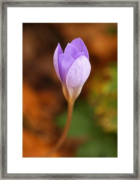 Singular Appearance Framed Print