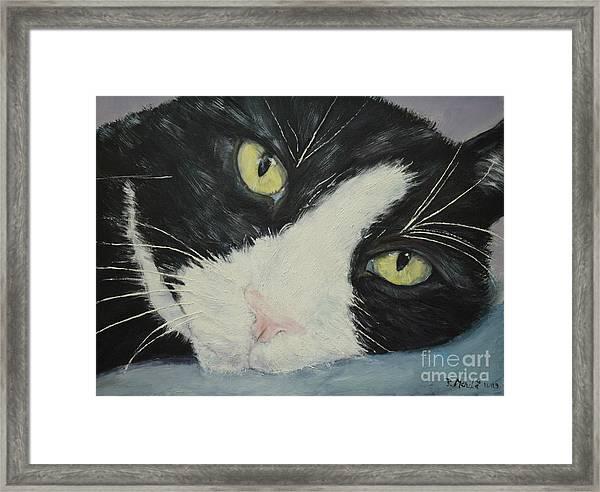 Sissi The Cat 1 Framed Print