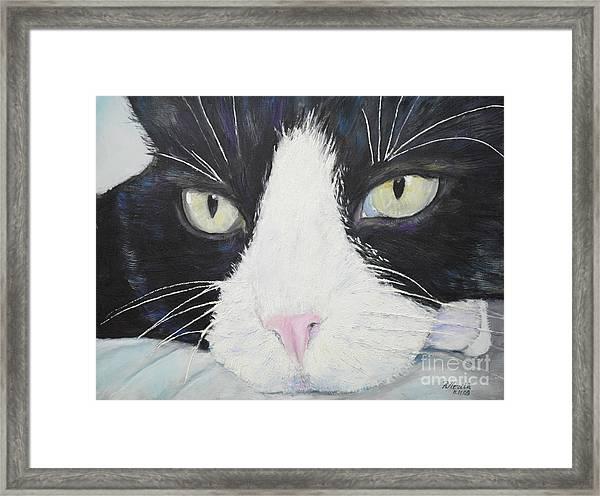 Sissi The Cat 2 Framed Print