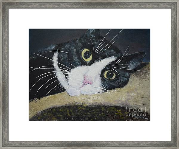 Sissi The Cat 3 Framed Print