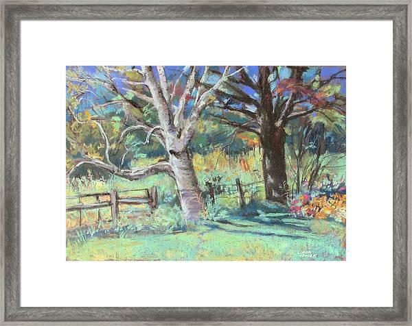 Sister Trees Framed Print