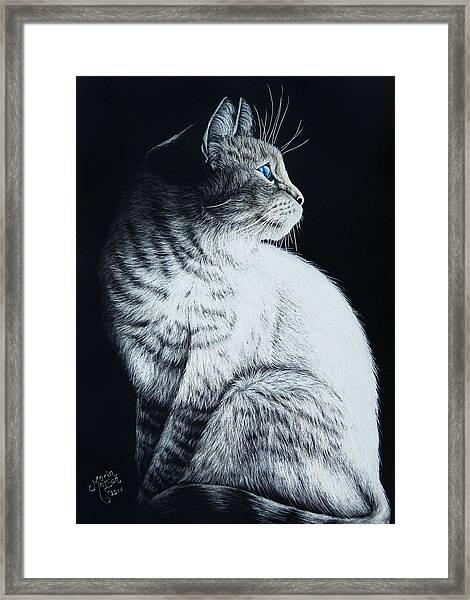 Sitting Cat Framed Print