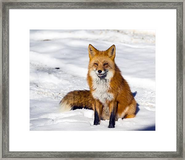 Sitting Pretty Framed Print