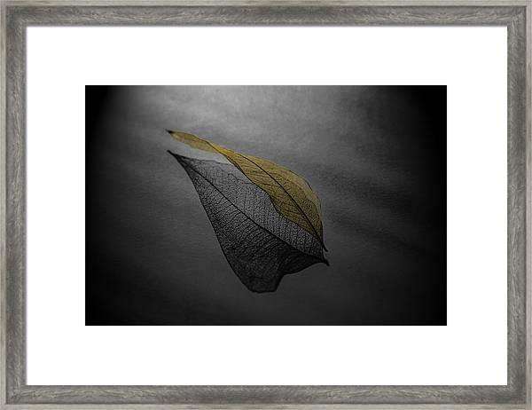 Skeleton Leaf 4716 Framed Print