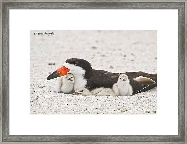 Skimmer Family Cuddle Framed Print